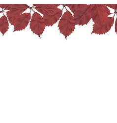 Red leaves border vector