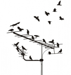 Crows on the antenna vector