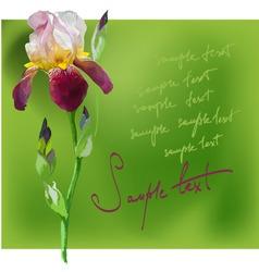 Beautiful flower iris vector