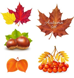 Vintage autumn set vector