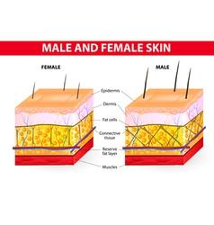 Skin male and female vector