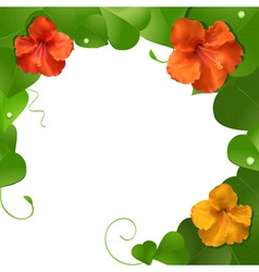 Orange and red hibiscus flowers on a lush green le vector
