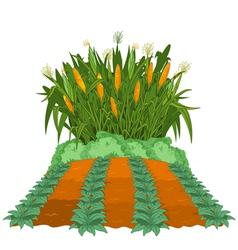 Planting corn vector