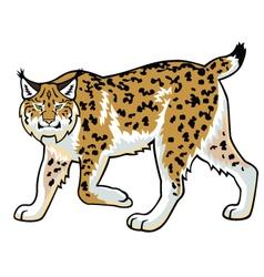 Lynx on white vector