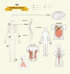 Human body anatomy vector