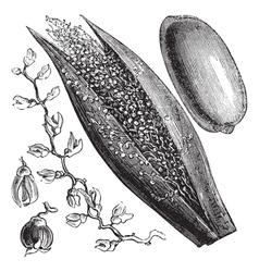 Date palm vintage engraving vector