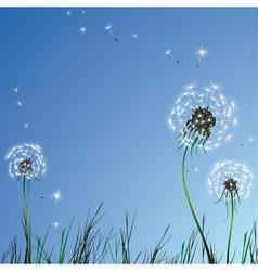 Realistic dandelions vector