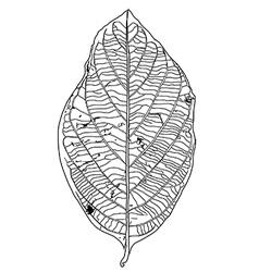 Dry leaf vector