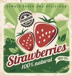 Vintage poster template for strawberry farm vector