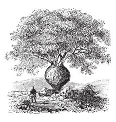 Bottle tree vintage engraving vector