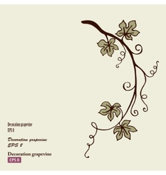 Decoration grape vine vector