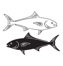 Fish amberjack vector