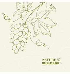 Grape wine card vector