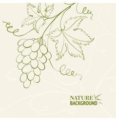 Grape wine card vector