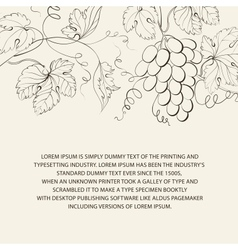 Engraving of grapes branch vector