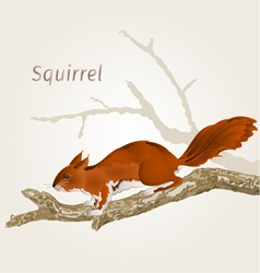 Squirrel on an old tree natural rodent vector