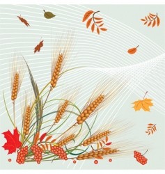 Autumn leaves and ears vector