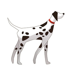 A dalmatian is standing vector