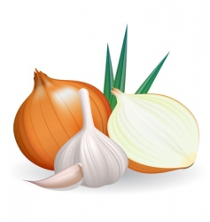 Onion and garlic vector