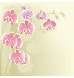 Stylized orchid vector