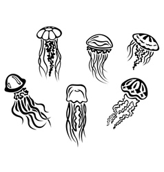 Different underwater jellyfishes vector
