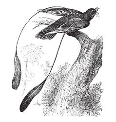 Nightjar vintage engraving vector