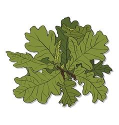 Branch of an oak vector