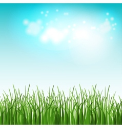 Green summer field with flowers and grass vector