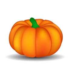 Fresh orange pumpkin isolated on white background vector
