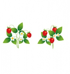 Strawberry bushes vector