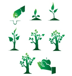 Planting of trees vector
