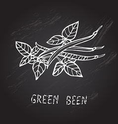 Hand drawn green beans vector