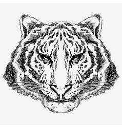 Tiger drawn vector