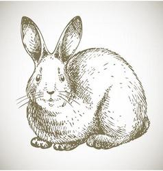 Bunny sketch vector