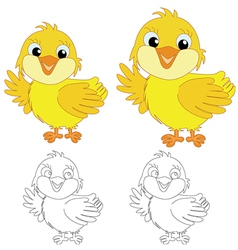Chicks on the white background vector