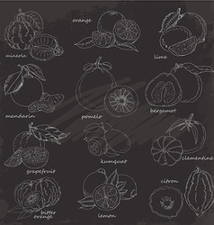 Set of citrus fruits hand drawing sketch on vector