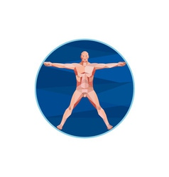 Da vinci man anatomy low polygon vector