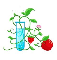 Gmo genetically modified vector