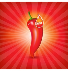 Sunburst background with red hot pepper vector