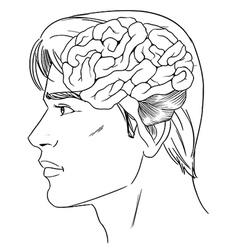 The human brain vector