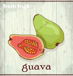 Hand drawing of guava fresh fruit sketch vector