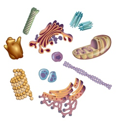Organelles found in cells vector