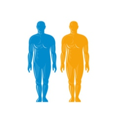 Male human anatomy standing front vector