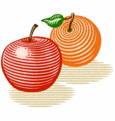 Apple and orange vector