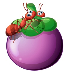 The two ants and the violet fruit vector