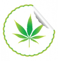 Cannabis leaf label vector