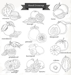 Set of citrus fruits hand drawing sketch vector
