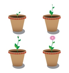 Growth of flower vector