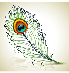 Peacock feather vector