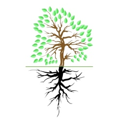 Green tree with root vector